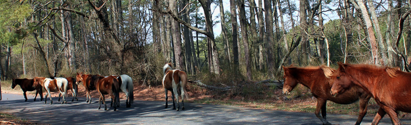 chincoteague island singles & personals The best things to do in chincoteague island create a fully customized day-by-day itinerary for free  visit a single location or make it a multi-destination trip.
